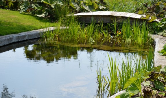 Oplevering - 11 - Assenede -Vijveraanleg aquatikoi